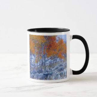 Aspen-Bäume in den Herbstfarben, Bighorn-Berge, Tasse