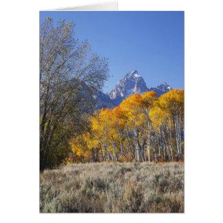 Aspen-Bäume mit dem Teton Gebirgszug 3 Karte
