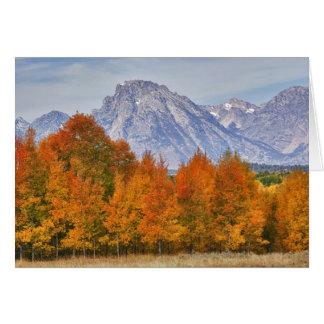 Aspen-Bäume mit dem Teton Gebirgszug 5 Karte
