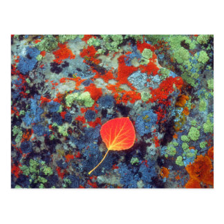 Aspen-Blatt auf einer Flechte bedeckte Felsen Postkarte