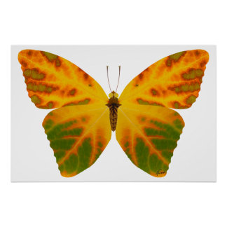 Aspen-Blatt-Schmetterling 1 Poster