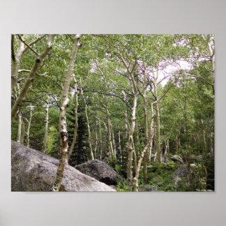 Aspen- und Nadelbaumwald in RMNP. Poster