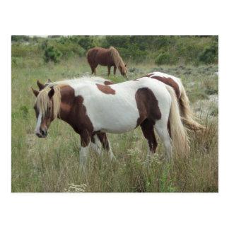 Assateague Ponys Postkarte
