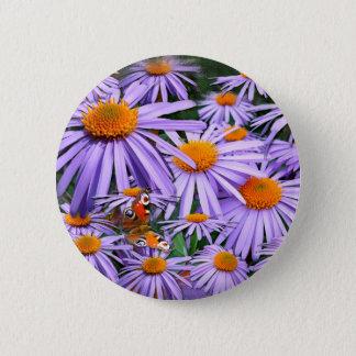 Aster tongolensis 'Berggarten Runder Button 5,1 Cm