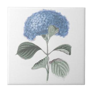 Atemberaubende blaue Hydrangea-Blume Keramikfliese