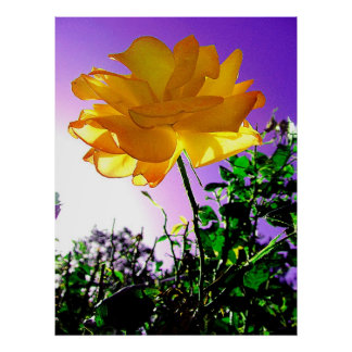Atemberaubende einzigartige orange Thorned Rose Poster