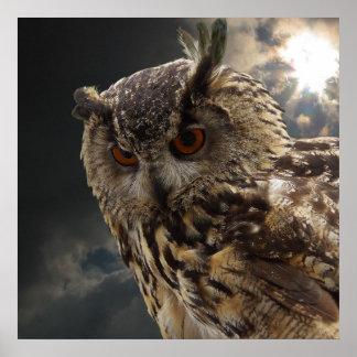 Atemberaubende Eulen-Fotografie-Reihe Poster