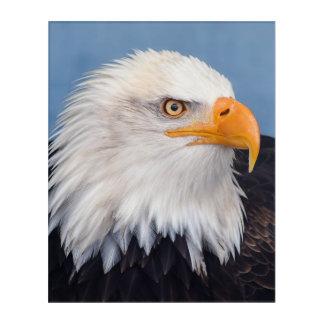 Atemberaubender kahler Adler auf Acryldruck