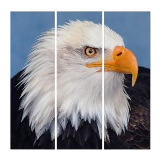 Atemberaubender kahler Adler auf Triptychon