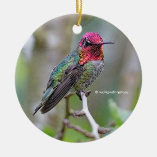 Atemberaubender männlicher Annas Kolibri auf dem Keramik Ornament