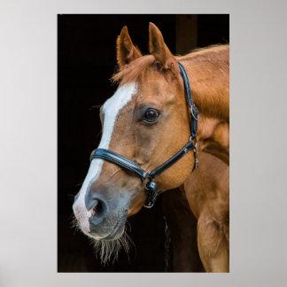 Atemberaubendes braunes Pferdeporträt Poster