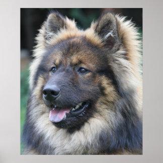 Atemberaubendes eurasisches Hundeporträt Poster