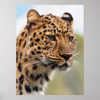 Atemberaubendes Leopardporträt Poster
