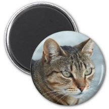 Atemberaubendes Tabby-Katzen-nahes hohes Porträt Magnets
