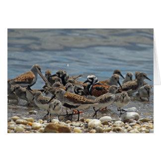 Atlantik-KüsteShorebirds: Delaware-Bucht Karte