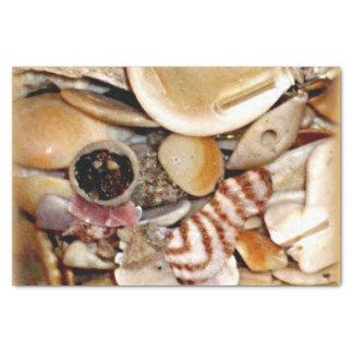 Atlantik-Muscheln Seidenpapier