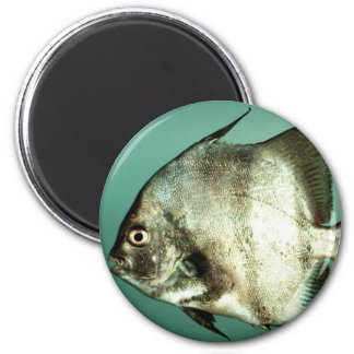 Atlantische Marktfische Runder Magnet 5,7 Cm
