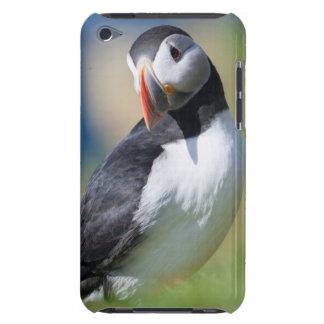 Atlantischer Papageientaucher (Fratercula Arctica) Case-Mate iPod Touch Case