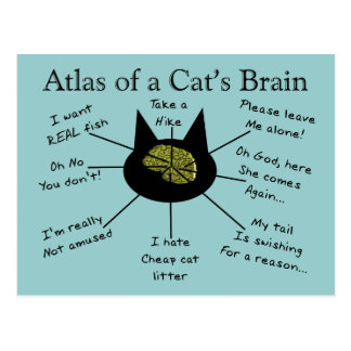 Atlas des Gehirns einer Katze Postkarte
