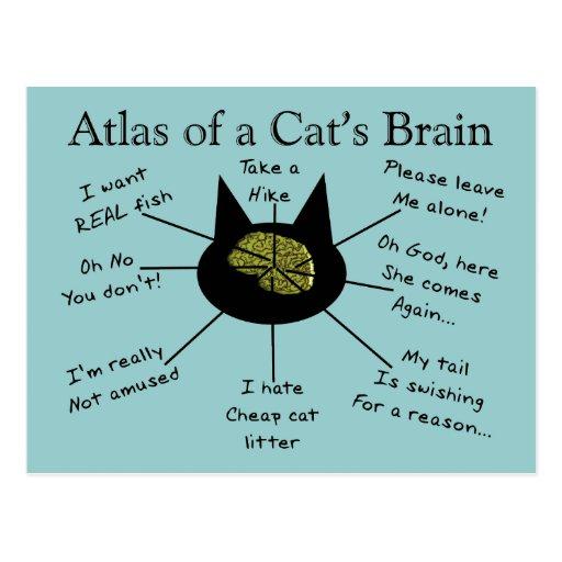 Atlas des Gehirns einer Katze Postkarten