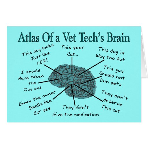 kostenloser tierarzt
