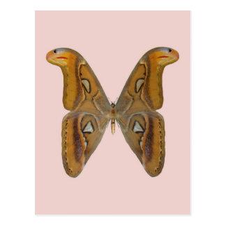 Atlas-Motte Postkarte