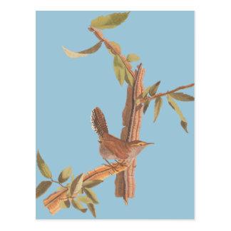 Audubon Bewicks Zaunkönig-alleiner Lied-Vogel auf Postkarte