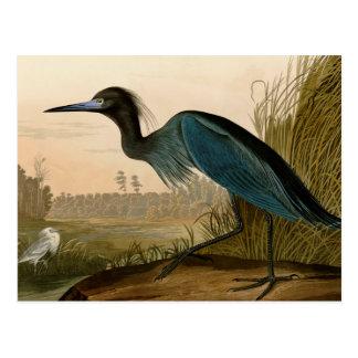 Audubon blaue Kran-Reiher-Vögel von Amerika Postkarte