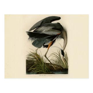 Audubon Graureiher-Vögel Postkarte