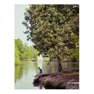 Audubon Lagune Postkarte