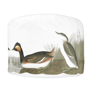 Audubon ohriger Grebe-Vogel-Tier-Puff-Osmane Hocker