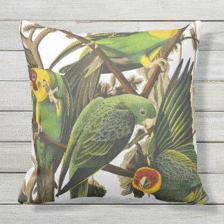 papagei kissen quadratische papagei dekokissen. Black Bedroom Furniture Sets. Home Design Ideas