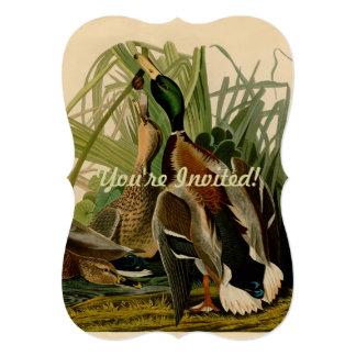 Audubon Stockentenente Vogel-Vintager Druck Ankündigungskarte