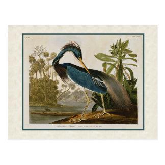Audubon Vintager Louisiana Blau-Reiher Postkarte