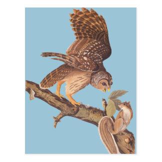 Audubons abgehaltene Eule und glückliche Postkarte
