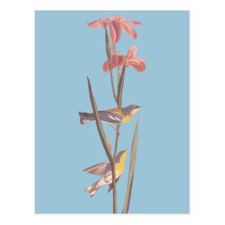 Audubons blaue Yellowback Trällerer-Lied-Vögel Postkarte