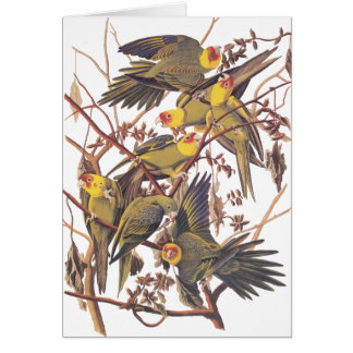 Audubons CarolinaParakeet Grußkarte
