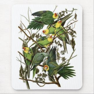 Audubons CarolinaParakeets Mousepads