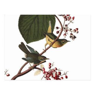 Audubons Extraträllerer Postkarte