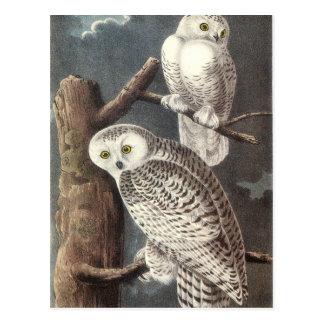 Audubons Snowy-Eule Postkarte