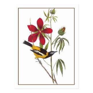 Audubons Troupial Postkarte