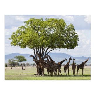 Auf Safari in Mikumi Nationalpark in Tansania, Postkarten