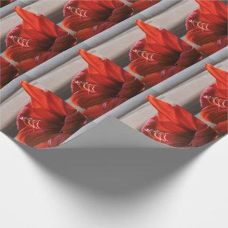 Auffallende rote Löwe-Amaryllis-Blume Geschenkpapier
