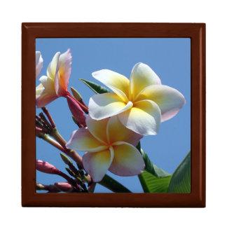 Auffällige Plumeriafrangipani-Blüte Erinnerungskiste