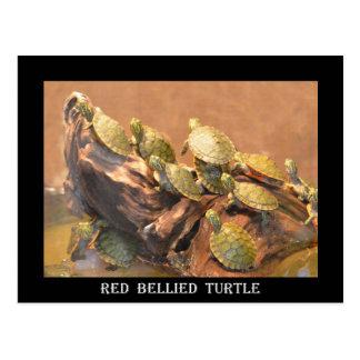 Aufgeblähte Schildkröte 2 (Alabama) Alabamas Rot Postkarte