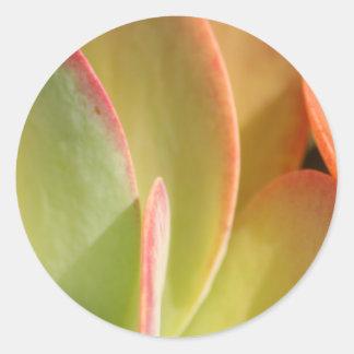 Aufkleber des Sonnenuntergang-Kaktus 3