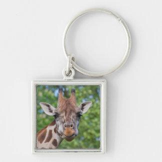 Aufmerksame Giraffe Silberfarbener Quadratischer Schlüsselanhänger