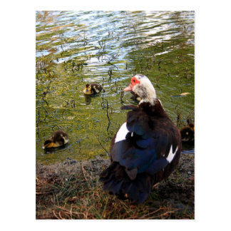 Aufpassende Mutter-Postkarte Postkarte