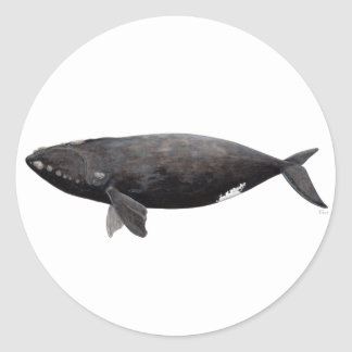 Aufrichtiger Wal von Atlantik Runder Aufkleber
