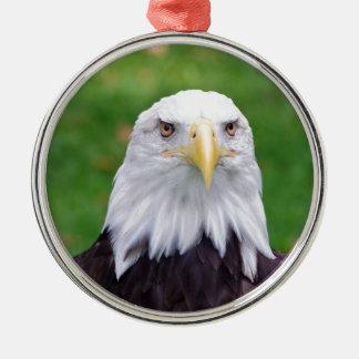 Augen eines Weißkopfseeadlers Silbernes Ornament